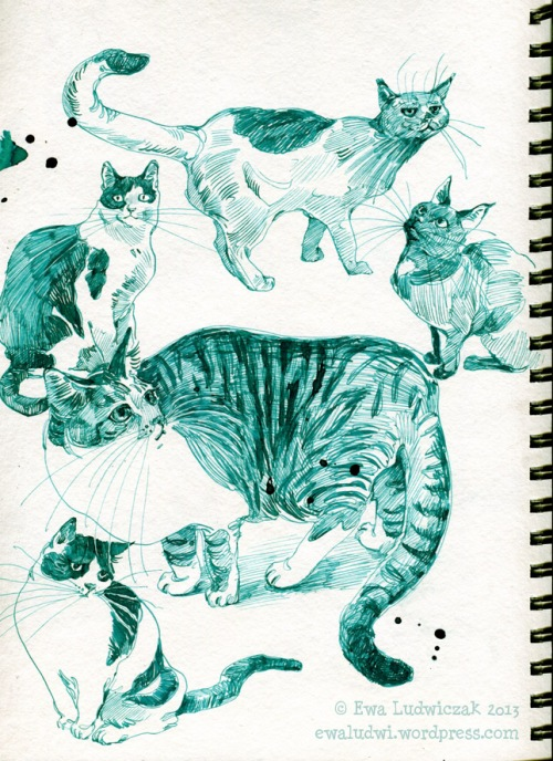 CatSketches2